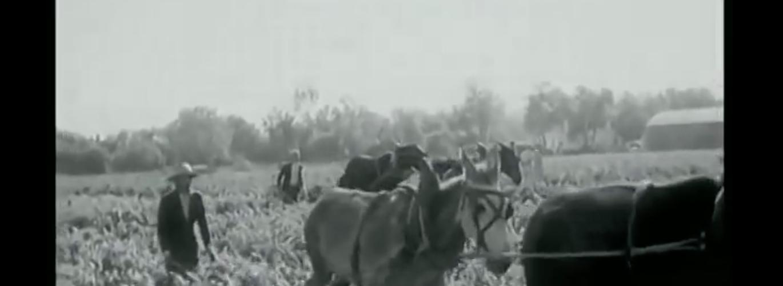 Vidéo : Les vins d'Algérie (1950)